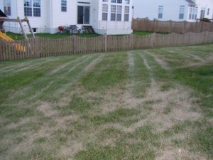 Mechanical damage on a stressed lawn