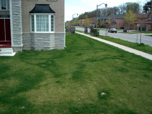 Lawn striping from hand-spreading fertilizer