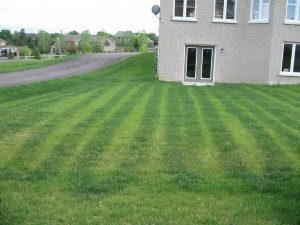 Grass striping on a lawn from drop fertilization