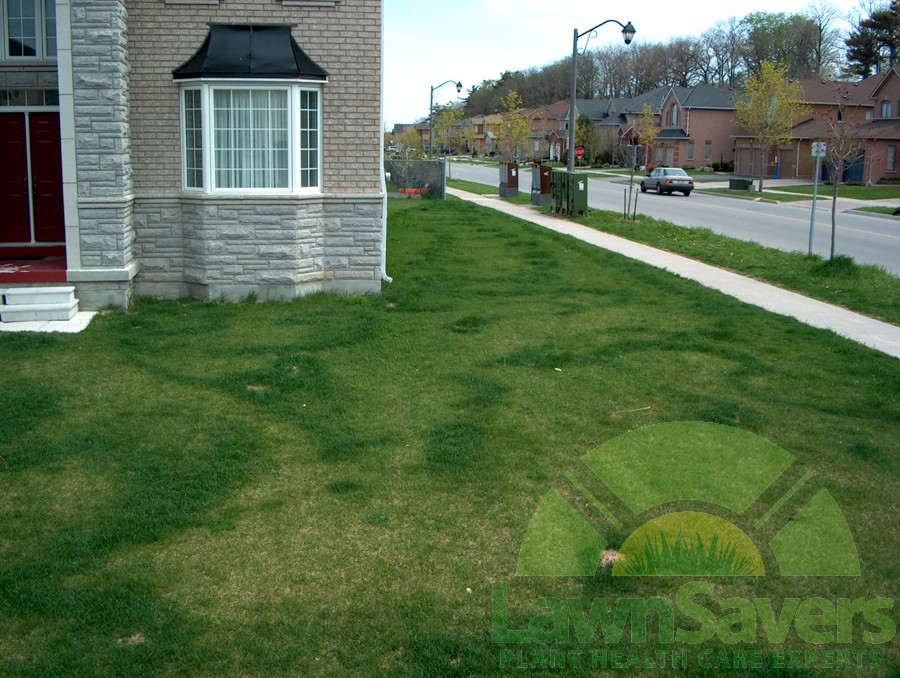 Sir step away from the fertilizer now astounding do it yourself lawn striping from hand spreading fertilizer solutioingenieria Gallery
