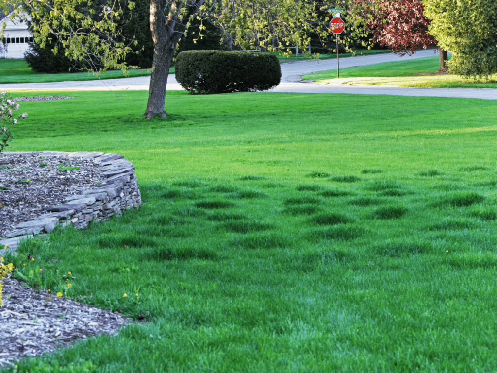 lumpy bumpy lawn how to repair lawnsavers toronto