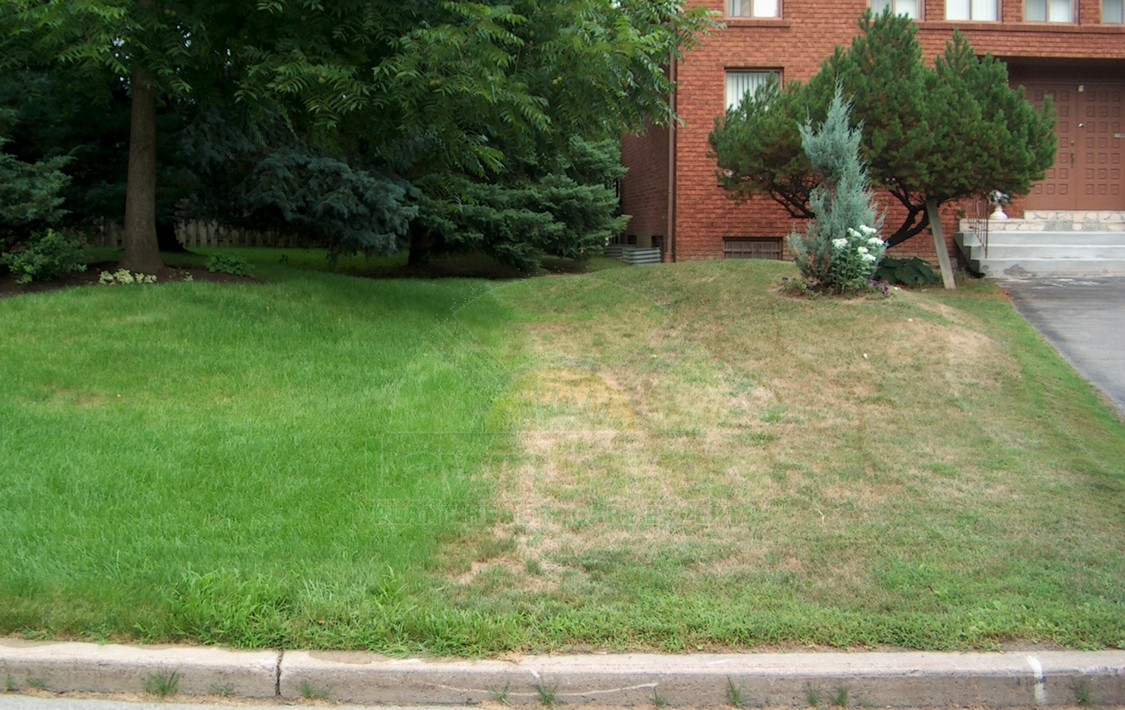 Get A Head Start On A Healthy Lawn This Fall Lawnsavers