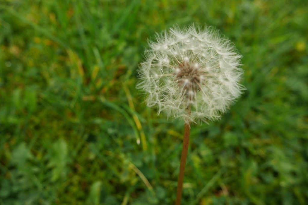 mowing weeds lawnsavers plant care experts toronto