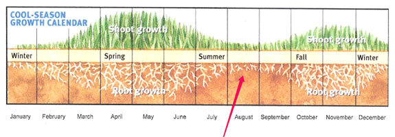 Cool Season Lawns Growth Calendar