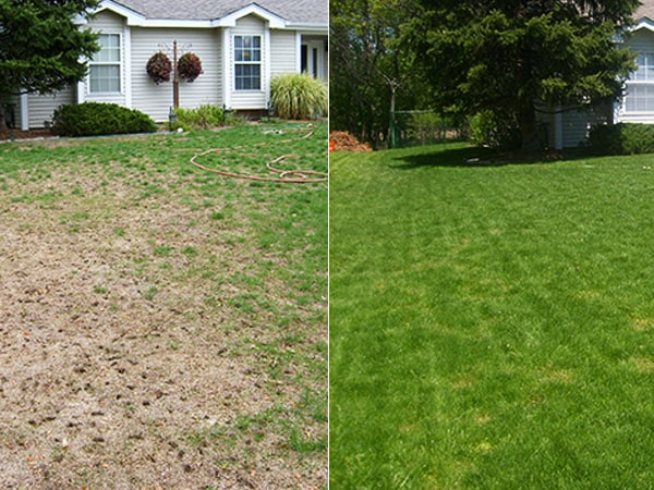 Over Seeding Before & After