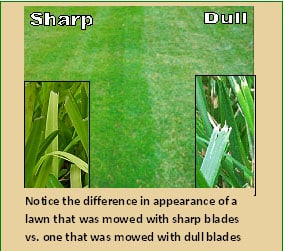 Mowing with dull mower blades is unhealthy for your lawn and ruins its appearance