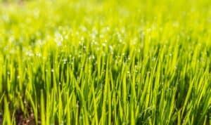 lawn aeration toronto ontario
