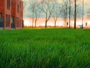 aerate ontario lawns lawnsavers toronto