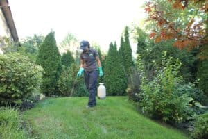 barrie lawn care lawnsavers weed control crabgrass