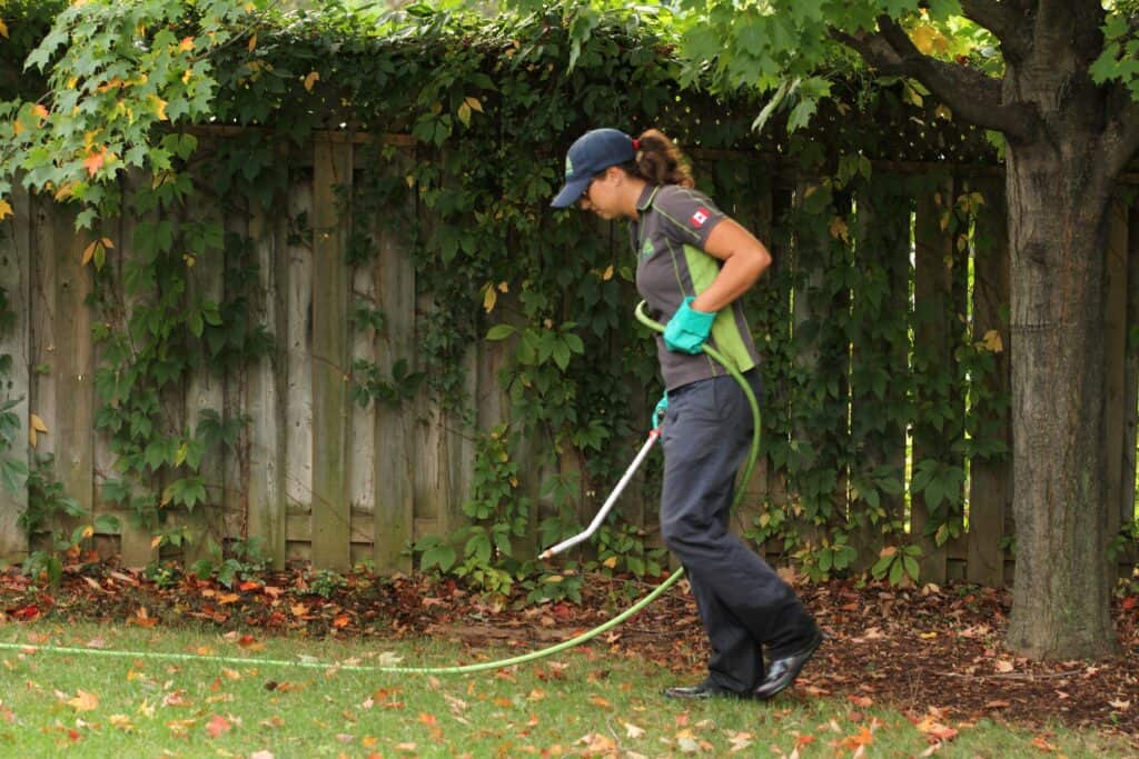 stouffville lawn care lawnsavers weed control