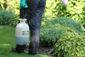 weed control services lawnsavers