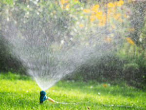 best time to water lawn sprinkler lawnsavers lawn care