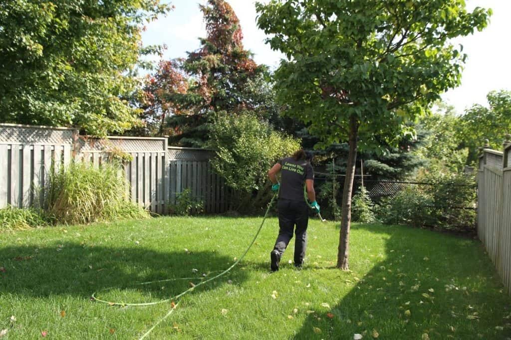 lawn maintenance package lawnsavers renovation