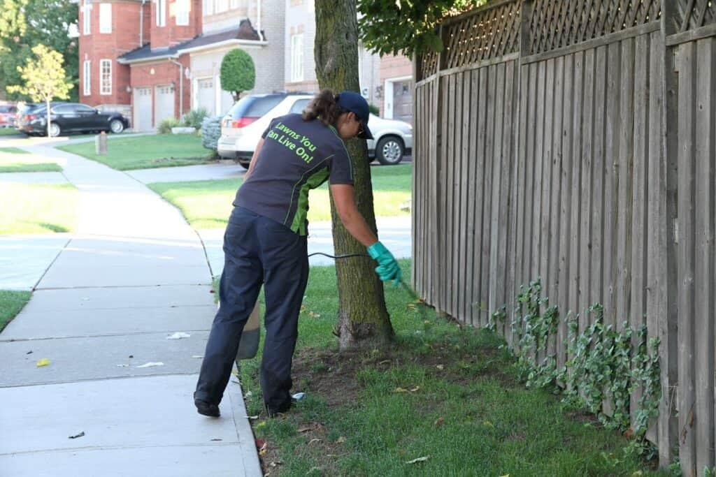 scarborough lawn care maintenance lawnsavers