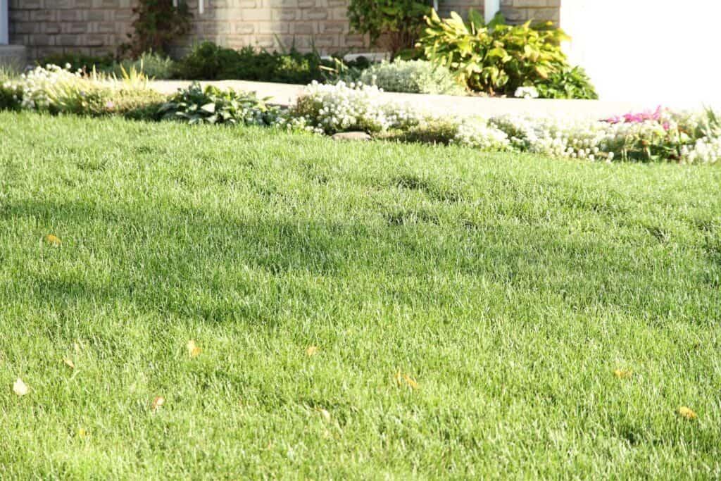 top dressing compost grass