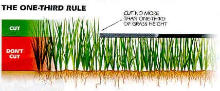 one third rule for grass cutting